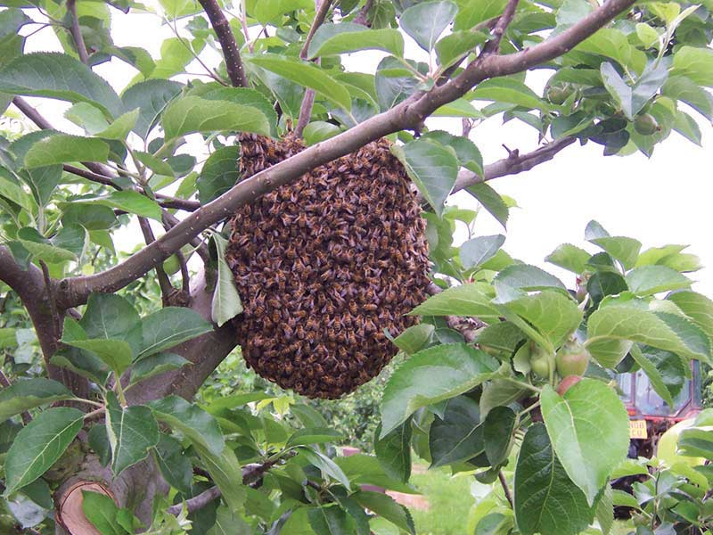 Fourayes Orchards Bees