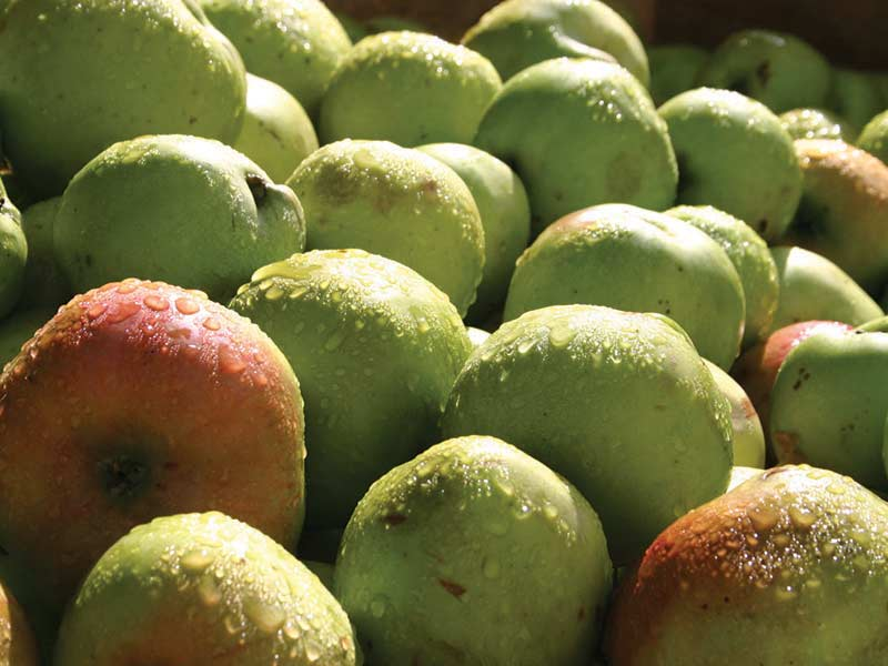 Fourayes Bramley Apples