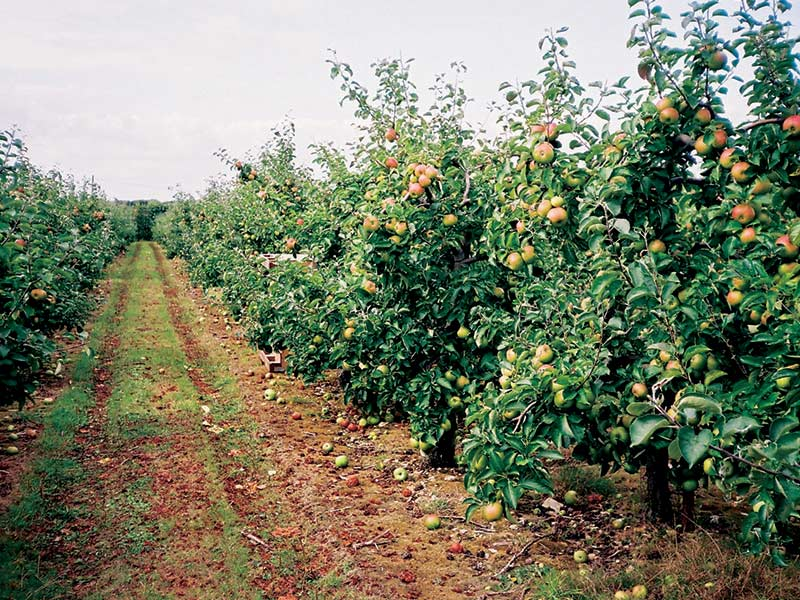 Fourayes Orchards Autumn