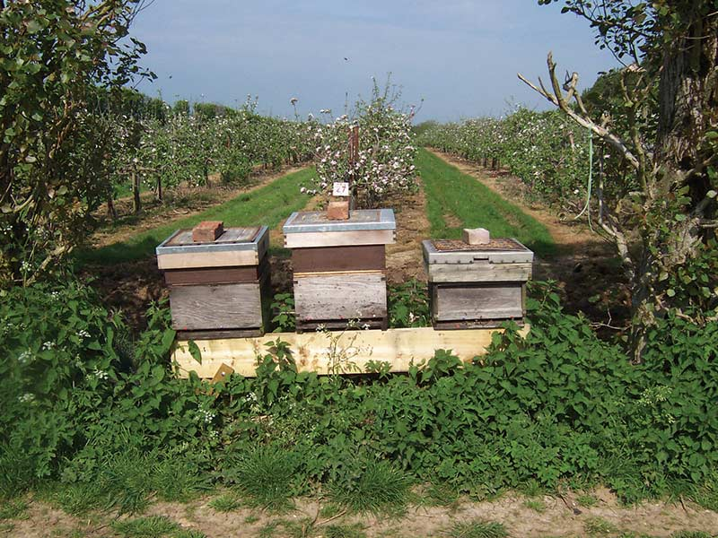 Fourayes Orchards Hives