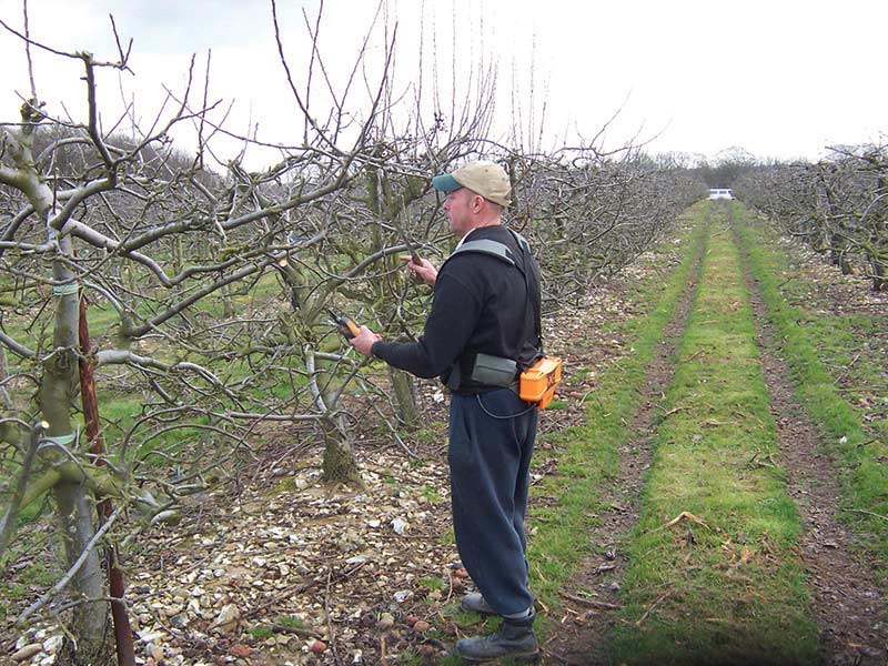 Fourayes Orchards Prune