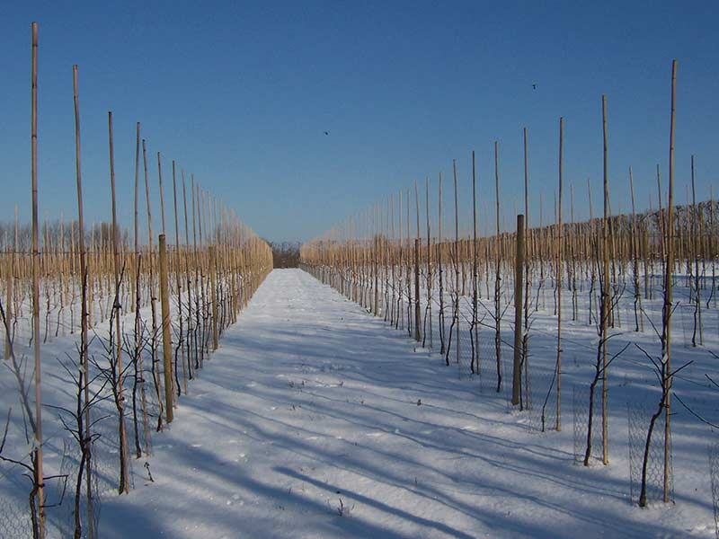 Fourayes Orchards Cold Weather