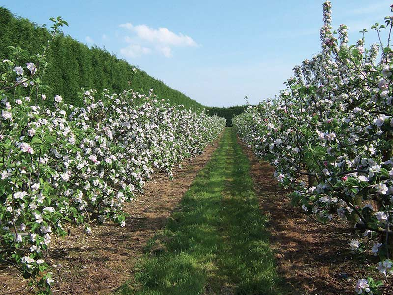 Fourayes Orchards Spring