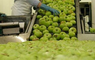 Apple_Processing